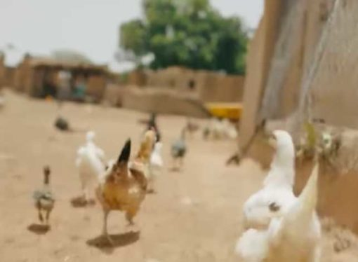 Bill Gates has revealed what he would do if he only had $2 (£1.38) a day to live on [spoiler it involves chickens]